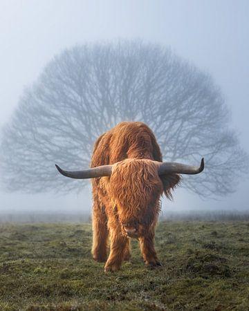 Hooglander koe in de mist met boom van Arjan Almekinders