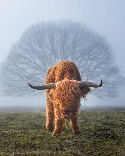 Highlander Kuh im Nebel mit Baum