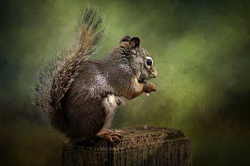 Eichhörnchen in grüner Landschaft von Diana van Tankeren
