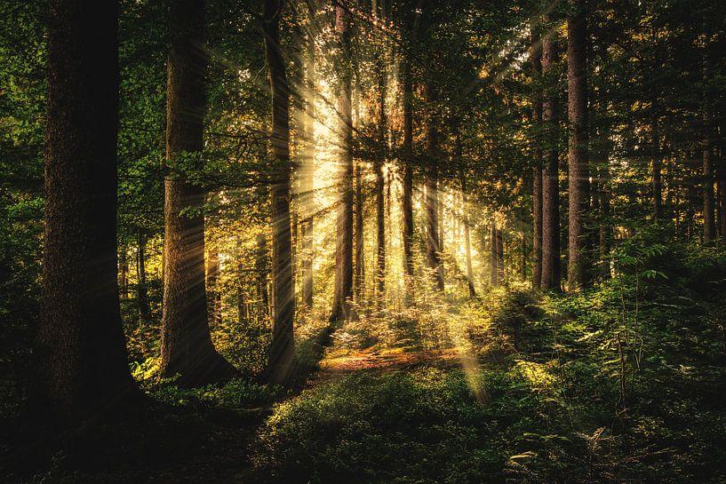 Die Sonne durch den Wald von Bert Hooijer