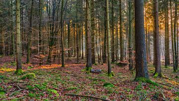 Sporen van licht in het herfstbos van Uwe Ulrich Grün