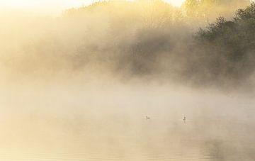 Vogels in het water bij mistige zonsopkomst (Nederland) van Marcel Kerdijk