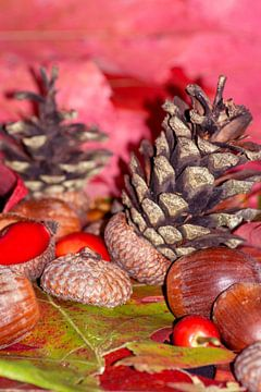 Hazelnuts in arbores autumnales van