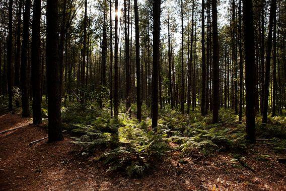 Bosgebied bij Valkeveen van Christiaan Krouwels