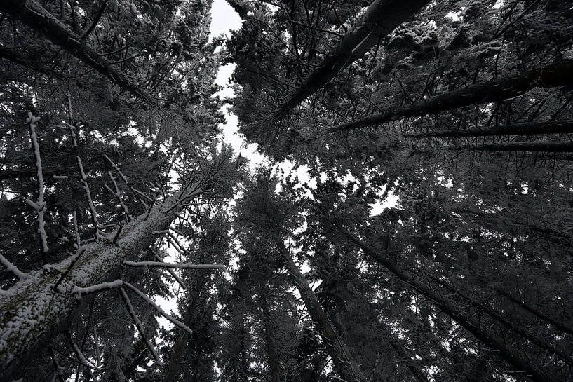 Sneeuw in de bomen van Jeroen Koppes