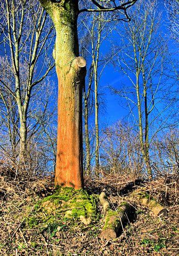 De rode boom van Sigrid Klop
