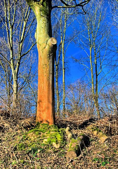 De rode boom