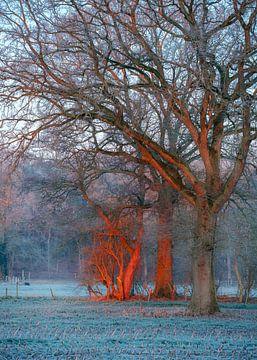 Eerst licht op mijn bomen van Vladimir Fotografie