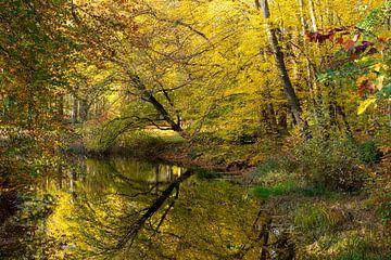 Herbstliche Farbreflexion im Teich Molenbosch Zeist von Peter Haastrecht, van