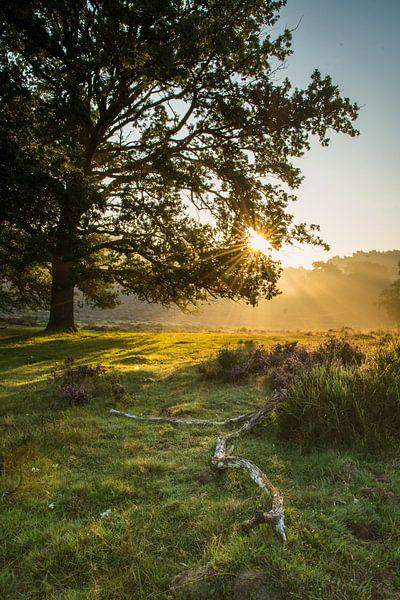 De zon laat zich door de bladeren zien. van Albert Lamme