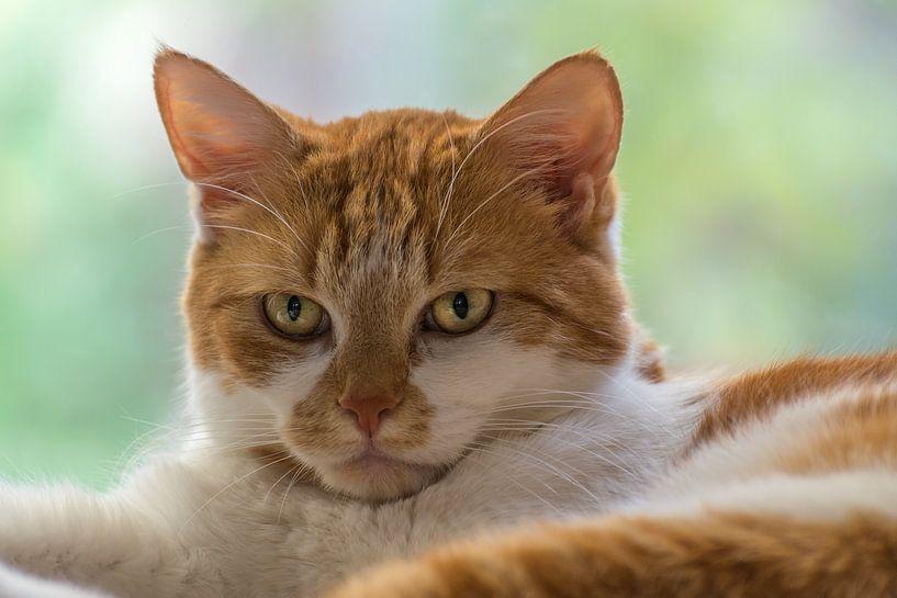 Porträt einer Katze von John van de Gazelle