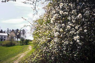 Bloeiende bloemen tussen de landen. van Luis Boullosa
