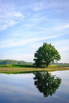 Baum zum Wasser von Johan Vanbockryck