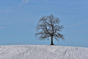lonesome tree in winter van Peter Bergmann