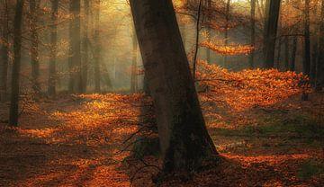 Kleuren van de herfst van Arjen Noord