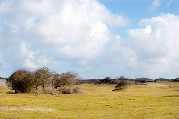 Paysage de dunes en Zélande