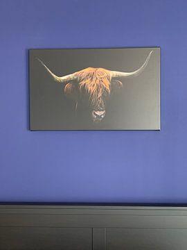 Klantfoto: Schotse Hooglander van Karel Ton