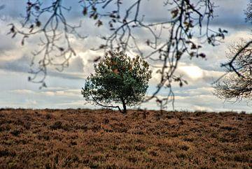 Des plaines ouvertes dans la forêt de Deeler. sur Jurjen Jan Snikkenburg