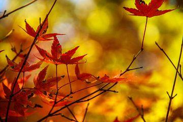 Warmer Herbst von Marieke de Lange