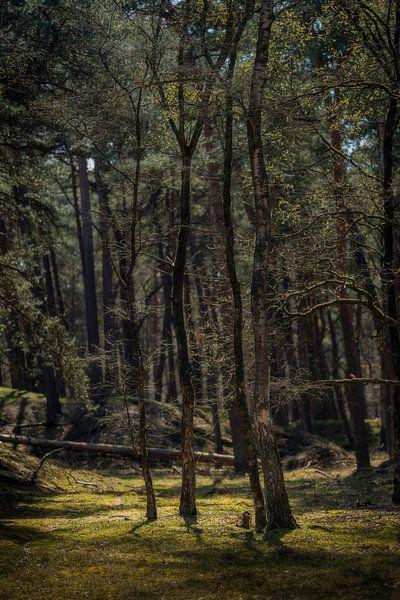 Bäume mit schönem Licht von Steven Dijkshoorn