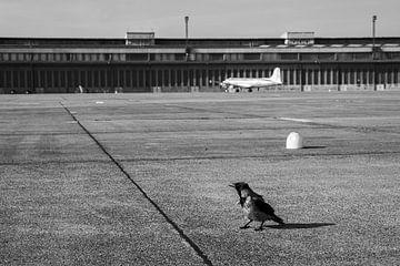 Berlin: Krähe in Tempelhof von Lynn van Gijzel