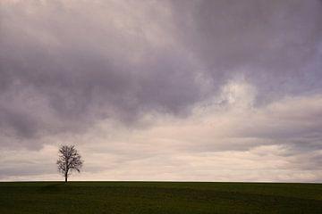 Eenzame boom van Lena Weisbek