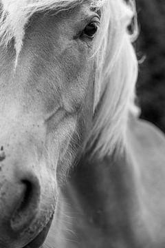 Portret van paard
