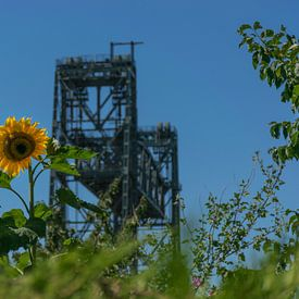 Spoorbrug De Hef, met zonnebloem op de voorgrond van Patrick Verhoef