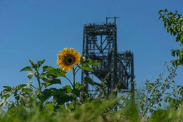 Spoorbrug De Hef, met zonnebloem op de voorgrond