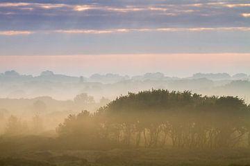 mist boven de duinen van wassenaar van Menno van Duijn