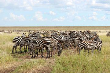 Groep zebra's op de savanne in Afrika van Robin Jongerden