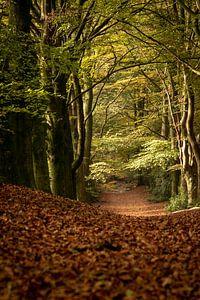 Het pad in het bos van Joost van Riel
