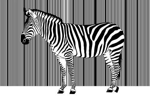 Zebra Barcode von