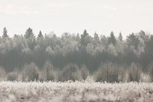 Natuur | Winter landschap - bossen Estland van