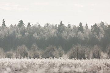 Natur | Winter Landschaft - Wald Estland von Servan Ott