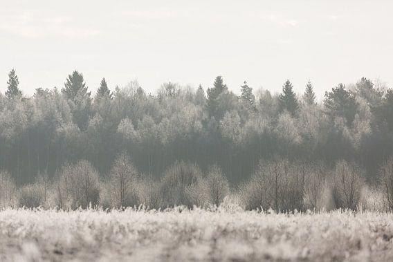 Natuur | Winter landschap - bossen Estland van Servan Ott