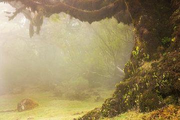 Giant tree. von Elly Besselink
