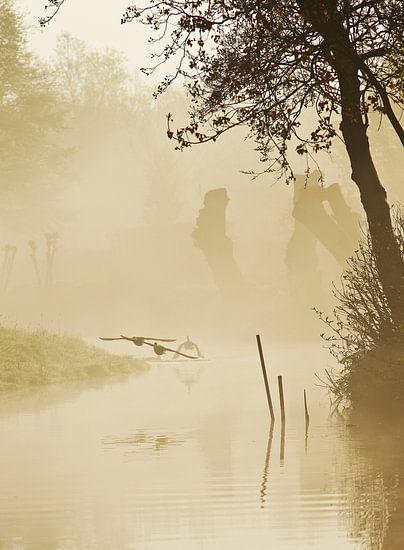 vogels in de mist  von Dirk van Egmond