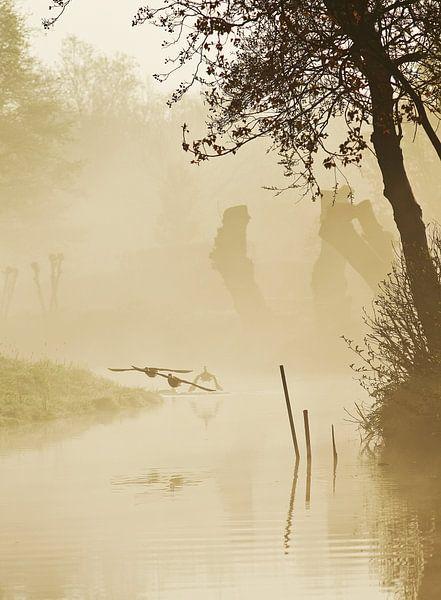 vogels in de mist  van Dirk van Egmond