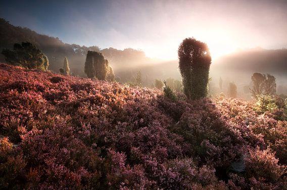misty sunrise on hills with flowering heather van Olha Rohulya