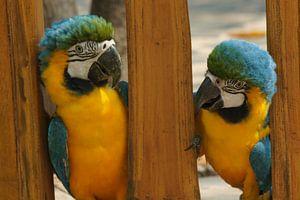 papagaaien tussen hout van Desiree Francke
