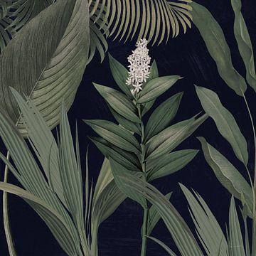 Dramatischer Tropical I Licht, Sue Schlabach von Wild Apple