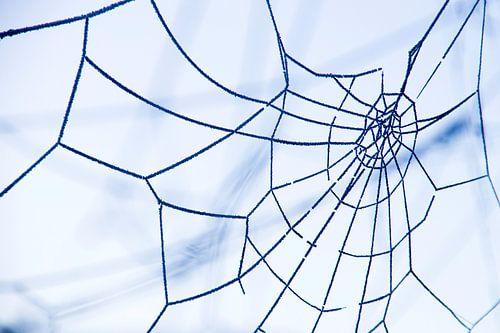 Rijp op een spinnenweb
