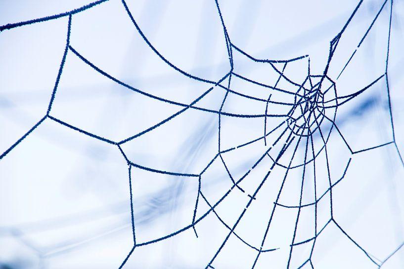 Rijp op een spinnenweb van Annieke Slob