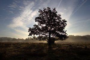 opkomende zon achter de boom van
