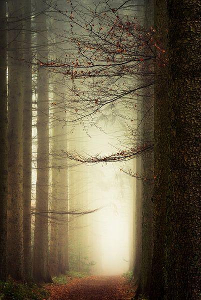 Branching Out. van Inge Bovens
