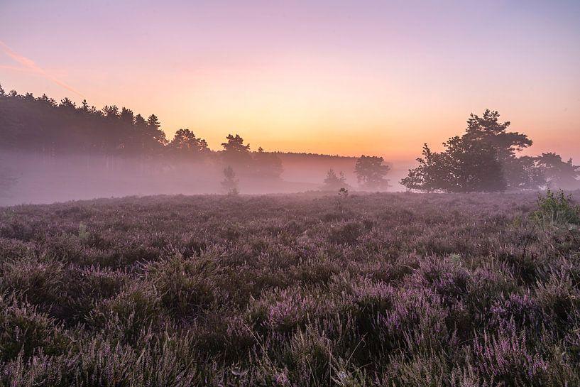 Even voor zonsopkomst op de heide van de wijers in belgisch Limburg, Belgie van Fotografie Krist / Top Foto Vlaanderen