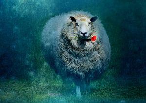 A sheep in love
