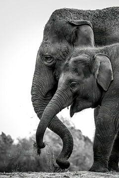 Olifanten portret van Amanda Blom