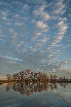 Spiegeling of reflectie bomen in water van Moetwil en van Dijk - Fotografie